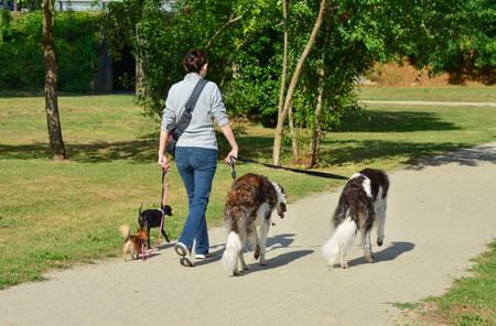 Een vrouw loopt verschillende rassen van honden tegelijkertijd in een park