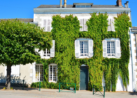 White old house covered with leaves of wild grapes in France Stock Photo