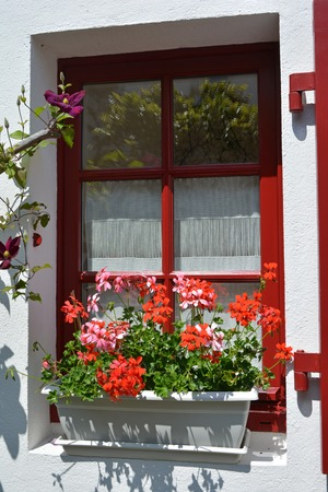 The red window is decorated with pots of geranium in France 版權商用圖片
