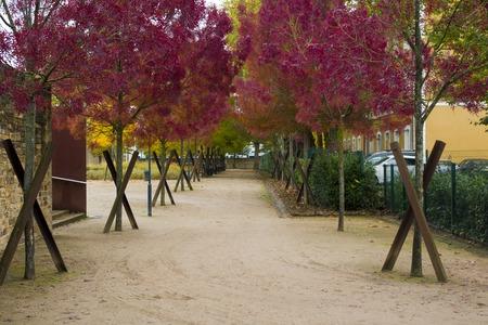 perspectiva lineal: Callejón en un parque de árboles con hojas rojas Foto de archivo