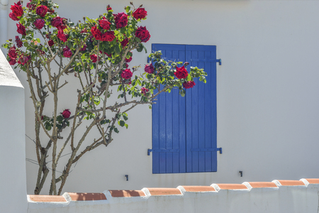 Window with blue shutters, roses flowers in front of window.