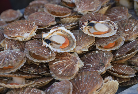 Fresh Scallops on a seafood market at Dieppe France