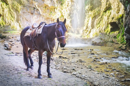 Brown horse on the background of mountains and waterfall 版權商用圖片