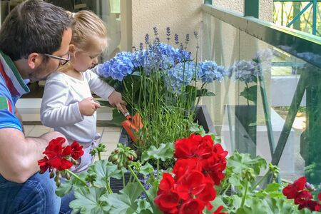 Father and daughter plant flowers on the balcony