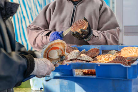 Women open and clean scallops for sale at a Fair of Herring and scallop shell in a port of Dieppe 版權商用圖片