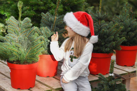 Small girl in a red cap chooses a Christmas tree in the market.
