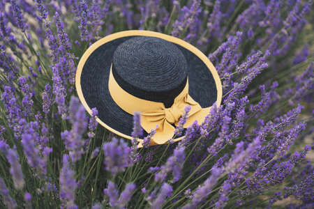 Black straw hat with yellow ribbon in a lavender field at Provence, France