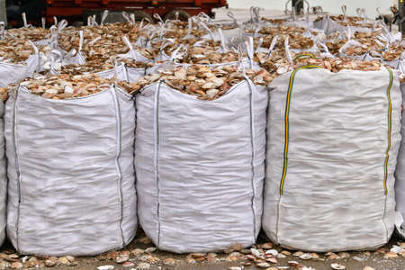 Bags with empty scallop shell for processing
