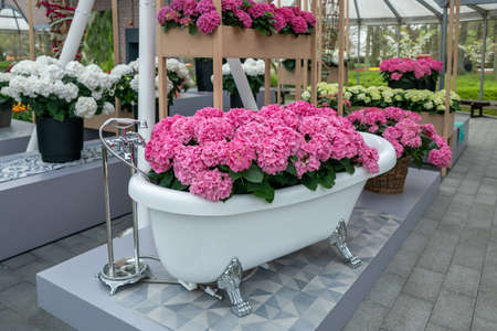 Vintage bath filled with pink hydrangea
