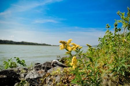danube: Danube flower