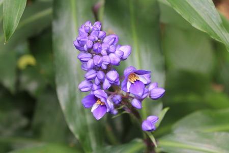 flores exoticas: flores exóticas azules Foto de archivo