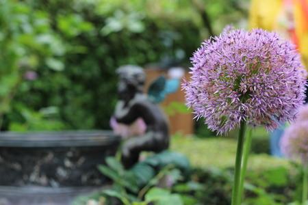 allium: Allium Flowers in front of Garden Statue