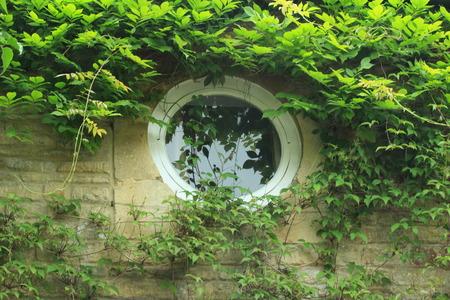 round window: Round Window on English Cottage - Overhanging Wysteria Stock Photo