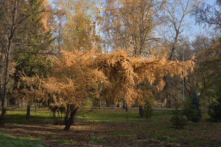 in autumn, the trees in the park, get a unique look.