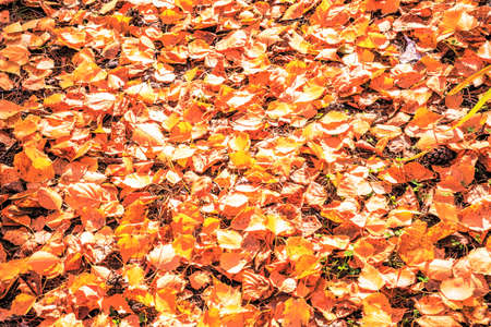 Autumn leaves lie on the ground in a yellow carpet.