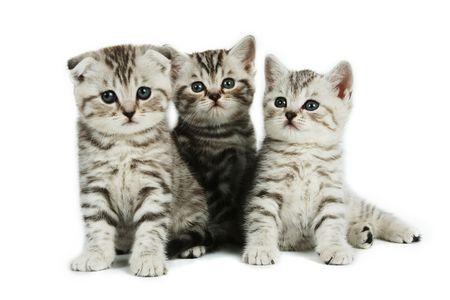 whiskar: kittens  on white backround