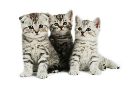 kittens  on white backround Stock Photo - 2693862