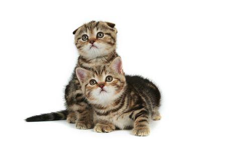 whiskar: kittens on white background Stock Photo