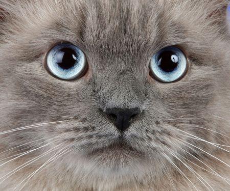 whiskar: cat portrait Stock Photo
