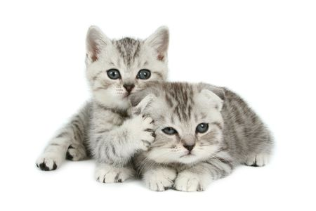 cute kittens  Stock Photo - 2955685