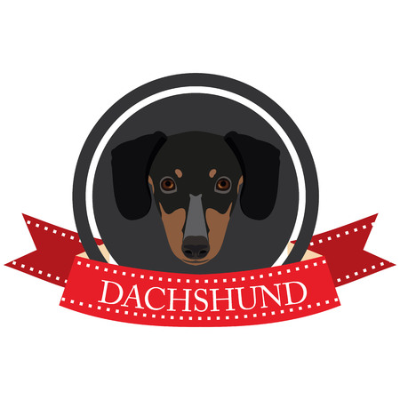 dachshund: flat icon Dachshund in vector format Illustration
