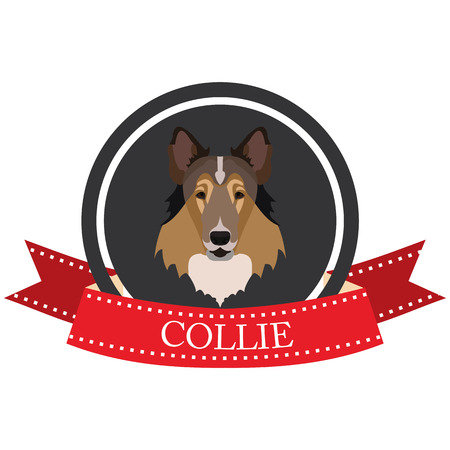 collie: flat icon Collie in vector format Illustration