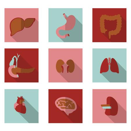 best flat icons organs