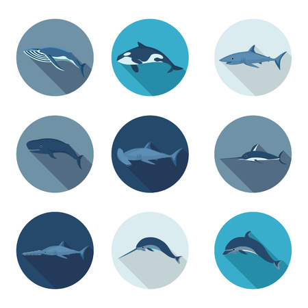 sea saw: whales and fish flat icons in vector format eps10 Illustration