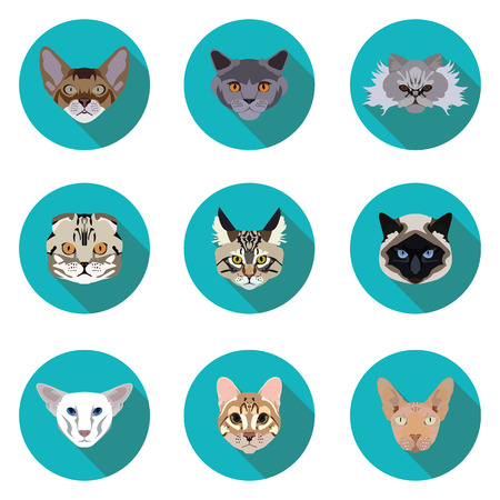 abyssinian: flat icons set of pedigreed cats  in vector format eps10 Illustration