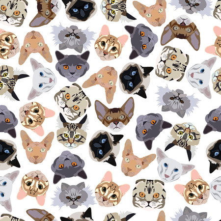 abyssinian: flat seamless pattern pedigree cats in vector format eps10 Illustration