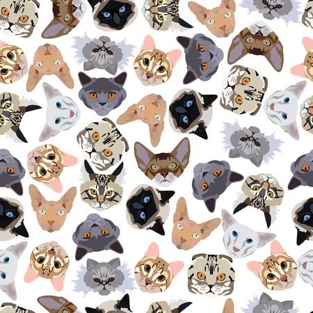 flat seamless pattern pedigree cats in vector format eps10 Illustration