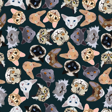 abyssinian: flat dark seamless pattern pedigree cats in vector format eps10 Illustration