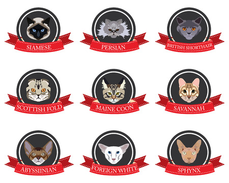 abyssinian: flat icons set of pedigreed cats with the names in vector format eps10