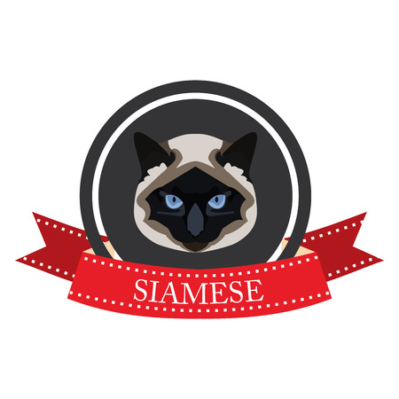 pedigreed: flat icon pedigreed cat siamese in vector format eps10