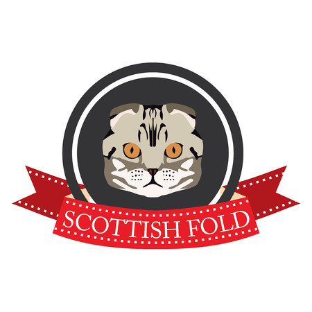 pedigreed: flat icon pedigreed cat scottish fold in vector format eps10