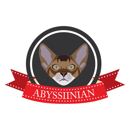 abyssinian: flat icon pedigreed cat abyssinian in vector format eps10 Illustration