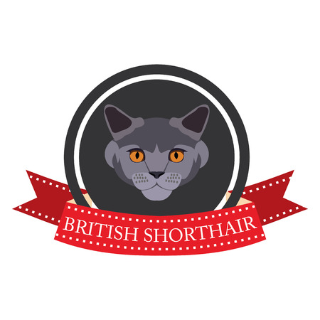 british shorthair: flat icon pedigreed cat british shorthair in vector format eps10