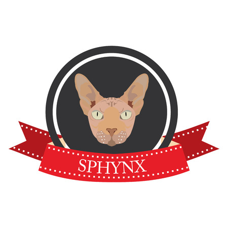 pedigreed: flat icon pedigreed cat sphynx in vector format eps10