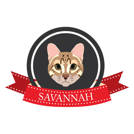 pedigreed: flat icon pedigreed cat savannah in vector format eps10 Illustration