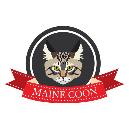 pedigreed: flat icon pedigreed cat maine coon in vector format eps10 Illustration
