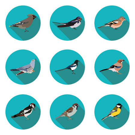 tomtit: flat icons birds in vector format eps10