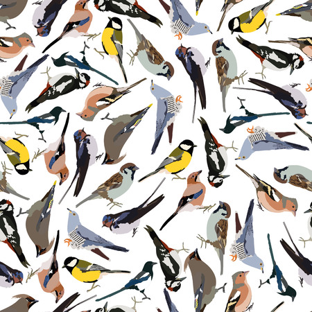 tomtit: seamless pattern birds in vector format eps10 Illustration