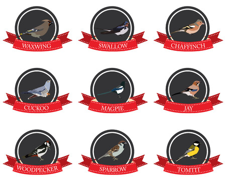 tomtit: flat icon birds with names in vector format eps10 Illustration