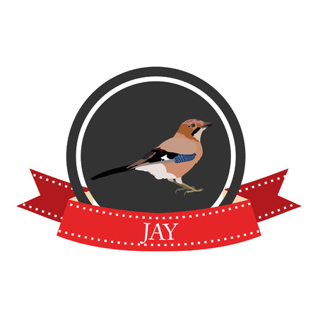 jay: flat icon jay in vector format eps10