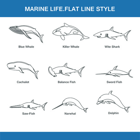 sea saw: marine live flat line style