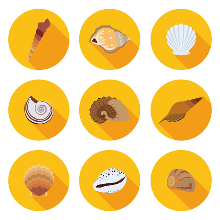 cartoon seahorse: flat icons seashells