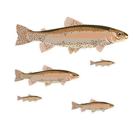 flat set salmon Illustration