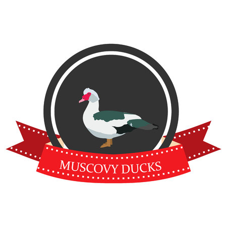 flat icon Muscovy Duck with the name Çizim
