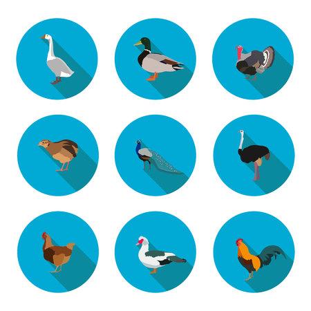 set of flat icons poultry