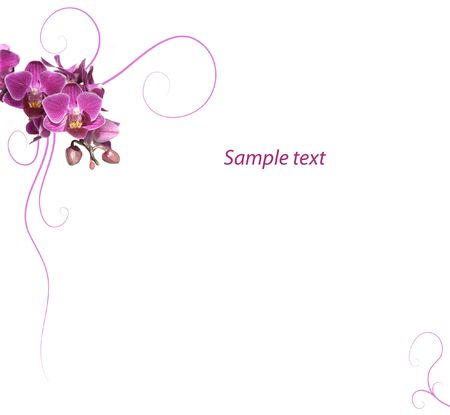 Purple orchid romantic background Stock Photo